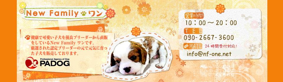 健康で可愛い子犬を優良ブリーダーから直販をしているNew Family ワンです。厳選された認定ブリーダーの元で元気に育った子犬を販売しております。
